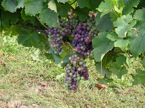 Vin bordeaux rouge histoire et caract ristique du vin bordeaux rouge comment faire voluer - Comment faire du vinaigre de vin ...
